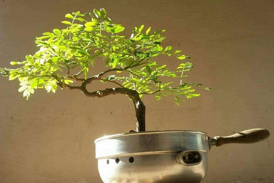 כלי קיבול לא שגרתי לעץ קרדיט לאומן מתי לנט